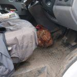 Cheeky chicken